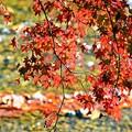 Photos: 秋深まる彩り(2)
