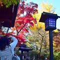 秋深まる彩り(3)