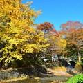 秋深まる彩り(4)