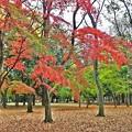 秋深まる彩り(5)