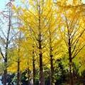秋深まる彩り(6)