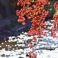 秋深まる彩り(7)