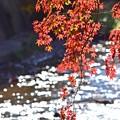 Photos: 秋深まる彩り(7)