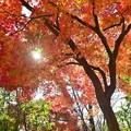 秋深まる彩り(8)