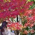 秋深まる彩り(9)