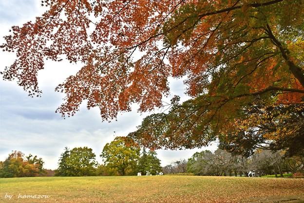 秋深まる彩り(10)
