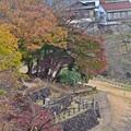 Photos: 秋色沿線(83)