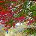 秋深まる彩り(11)