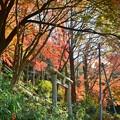 秋深まる彩り(12)