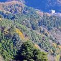 Photos: 来冬高尾の森