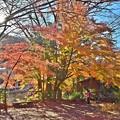 秋深まる彩り(13)