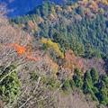 Photos: 晩秋高尾の森