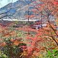 Photos: 晩秋もみじ電車
