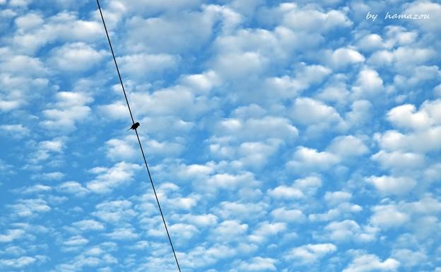 うろこ雲と鳥