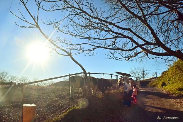 陽光が射す牧場