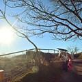 Photos: 陽光が射す牧場