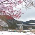 Photos: 裏高尾雪景色