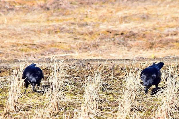 Crow Distance