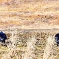 Photos: Crow Distance