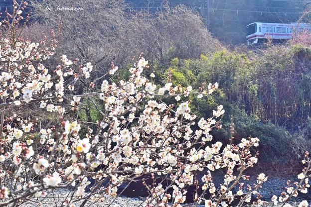 Photos: 梅香る~♪