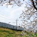 写真: 桜の下より211系を覗く@イセコマ