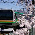 Photos: 桜とE231系