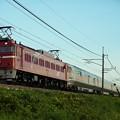 Photos: EF81-98牽引 カシオペア紀行@蒲須坂ー片岡