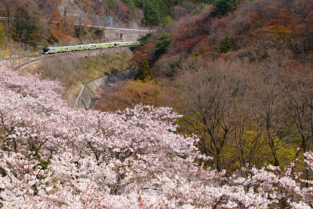 桜の諏訪峡を往くTRAIN SUITE 四季島 2