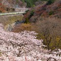 Photos: 桜の諏訪峡を往くTRAIN SUITE 四季島 2