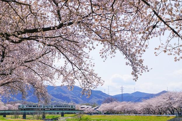 こだま千本桜とキハ110系その2