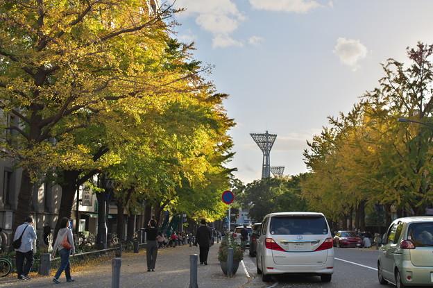 日本大通りの銀杏並木