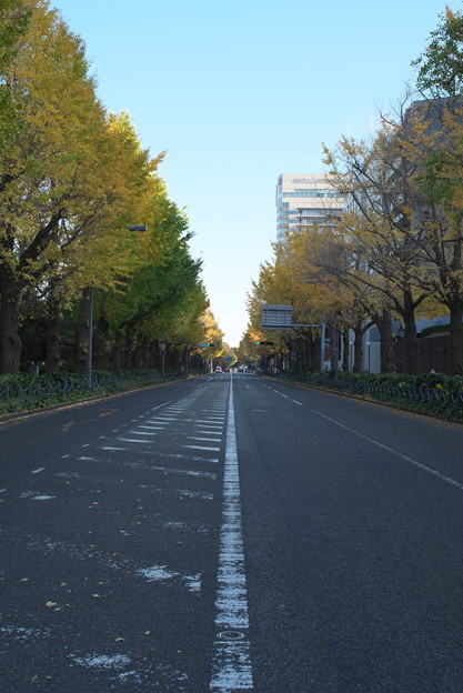 秋の山下公園通り