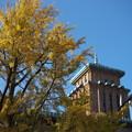 日本大通りの銀杏と県庁@Planar 50mm