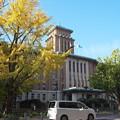 日本大通りの銀杏と県庁@Distagon 28mm