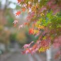 Photos: 建長寺の紅葉その2