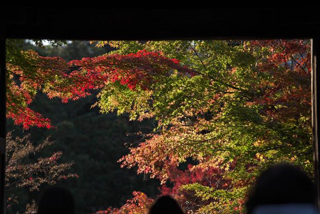 円覚寺の紅葉2
