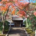 円覚寺・居士林と紅葉