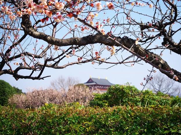 Photos: 平城宮の春