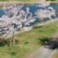 Photos: 【35ミリフルサイズ】ピント位置による効果の変化(1)
