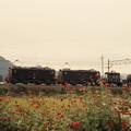 花と機関車