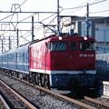 Photos: EF65 1118牽引の天理臨?
