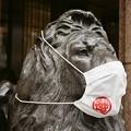 Photos: マスクをした三越のライオン