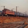 Photos: EF81牽引の「富士」