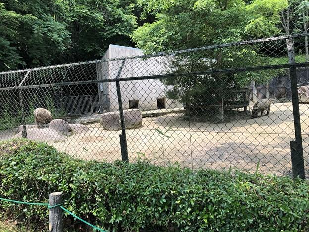 安佐動物園の二ホンイノシシ