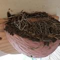 写真: 外組の巣