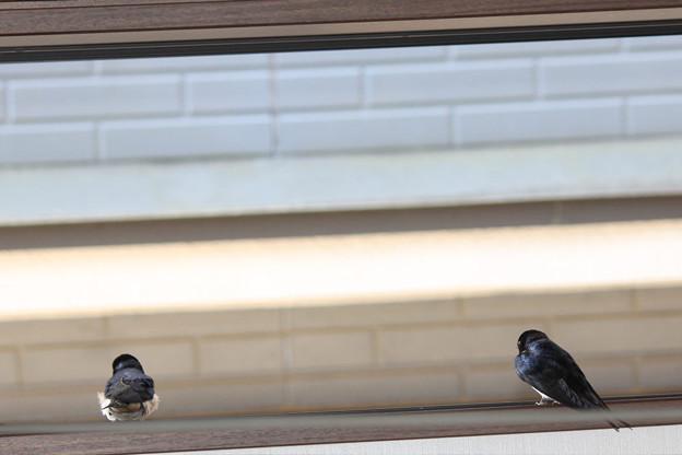 写真: 外を見てるご夫婦