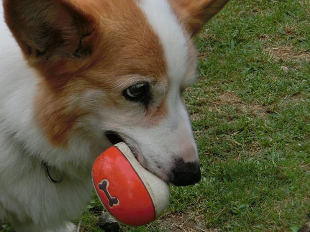 写真: ボールキャッチできた!
