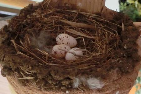 3個目の産卵