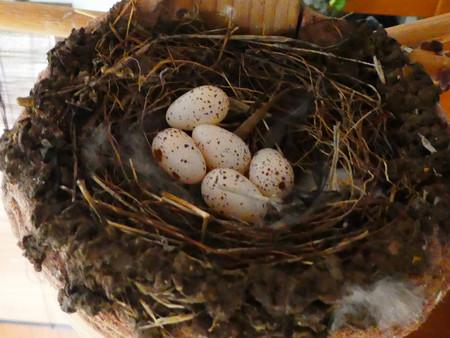 五個目の産卵