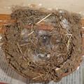 写真: 下ろした巣